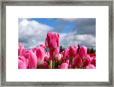 Tall Standing Tulip Framed Print