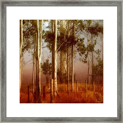 Tall Timbers Framed Print by Holly Kempe