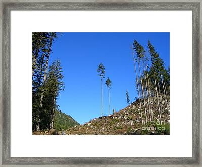 Tall Timbers Framed Print by Jim Thomson