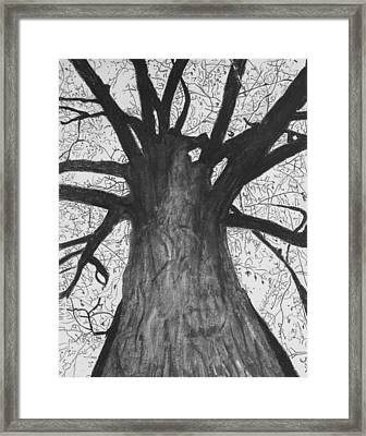 Tall Tree Framed Print