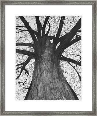 Tall Tree Framed Print