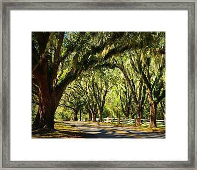 Tallahassee Canopy Road Framed Print