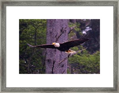 Framed Print featuring the photograph Talons Full Of Treasure  by Christy Pooschke