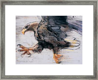 Talons   White Tailed Sea Eagle Framed Print by Mark Adlington
