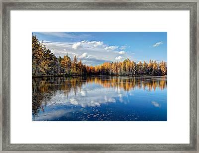 Tamarack Reflections Framed Print by David Patterson
