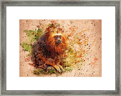 Tamarin Lion Monkey Framed Print by Svetlana Sewell
