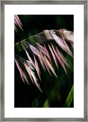 Framed Print featuring the photograph Tamarisk Tango by Deborah Hughes