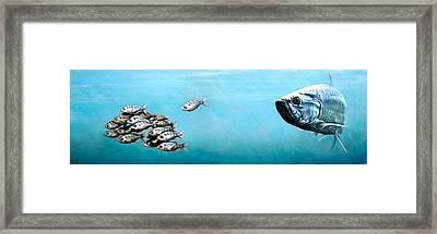 Tampa Bay Tarpon Framed Print