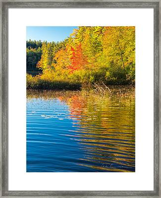 Tamworth 7881 Framed Print