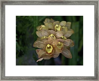 Tan And Yellow Orchid Framed Print by Liz Santie