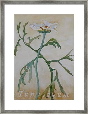 Tanacetum Framed Print
