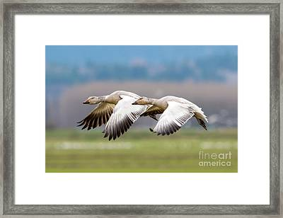 Framed Print featuring the photograph Tandem Glide by Mike Dawson