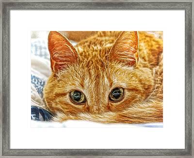 Tang The Orange Tabby Dwc Framed Print