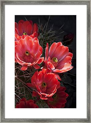 Framed Print featuring the photograph Tangerine Cactus Flower by Phyllis Denton