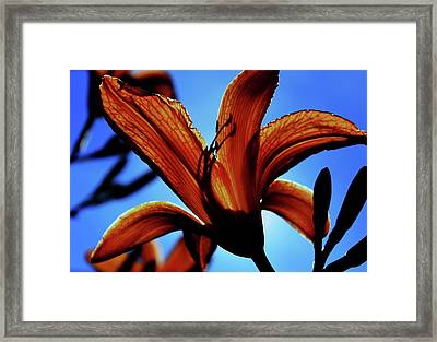 Tangerine Sky Framed Print by Toni Jackson