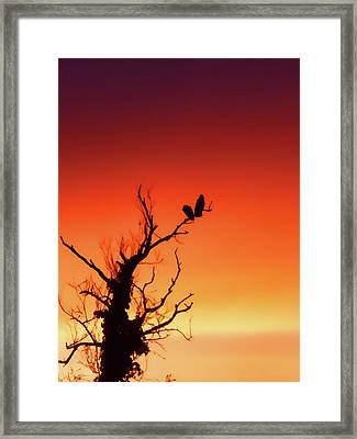 Tangerine Sunset Framed Print by Sharon Lisa Clarke
