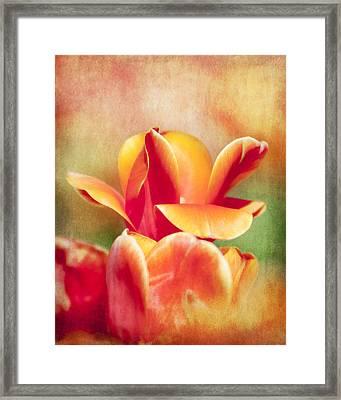Tangerine Tulip Sorbet Framed Print by Jeff Mize