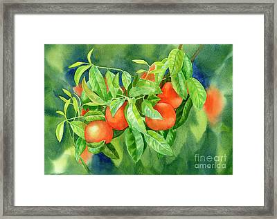 Tangerines With Background 2 Framed Print