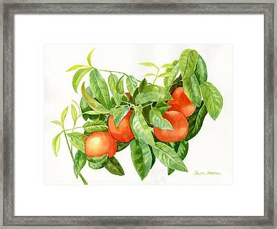 Tangerines With Leaves Framed Print by Sharon Freeman