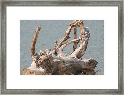 Tangled Framed Print by Amy Holmes