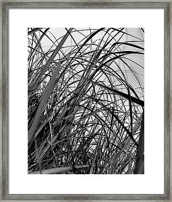 Framed Print featuring the photograph Tangled Grass by Susan Capuano