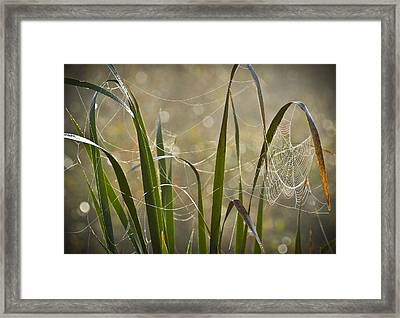 Tangled Highway Framed Print by Carolyn Marshall