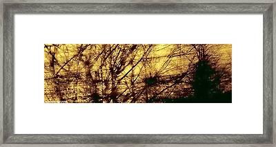 Tangled II Framed Print by Jane Tripp