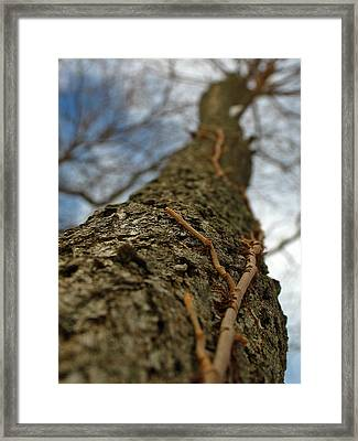 Tangled Framed Print by Juergen Roth