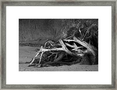 Framed Print featuring the photograph Tangled Knots - Tree Roots by Jane Eleanor Nicholas