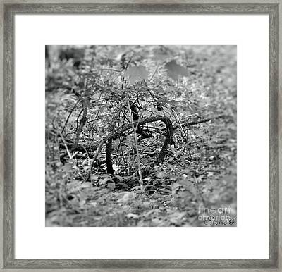 Tangled Love Framed Print