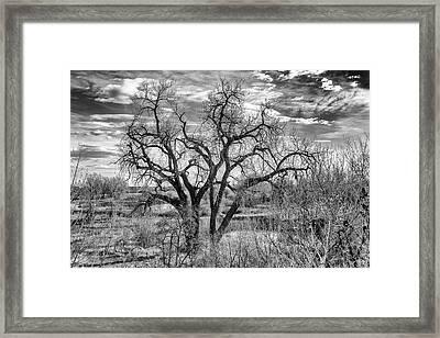 Tangled Old Tree On Platte River Framed Print