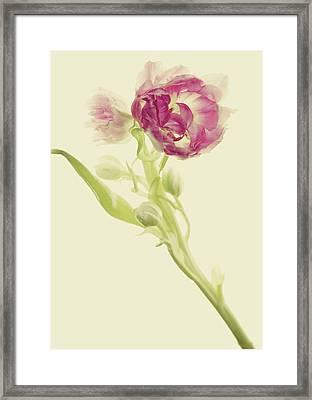 Tangled Framed Print by Rebecca Cozart