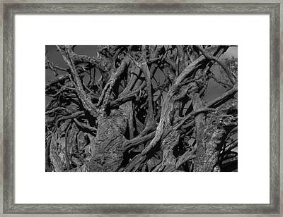 Tangled Tree Roots Framed Print