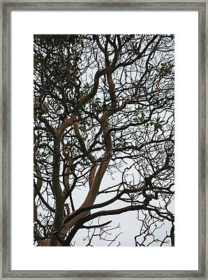 Tangled Web Tree Framed Print by Carol  Eliassen