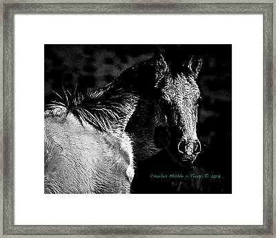 Taos Pony In B-w Framed Print