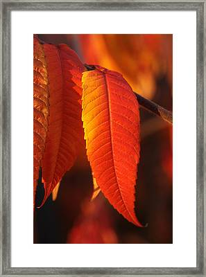 Tapering Light Framed Print by Connie Handscomb