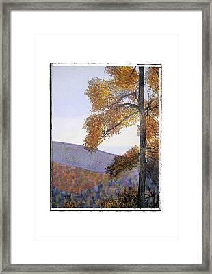 Tapestree Framed Print by Robert Boyette