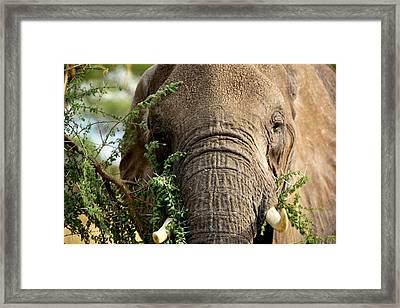 Tarangire 5 Framed Print