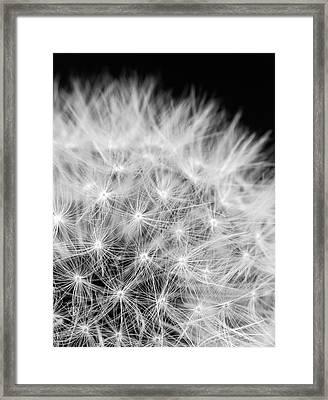 Taraxacum Framed Print by Wim Lanclus