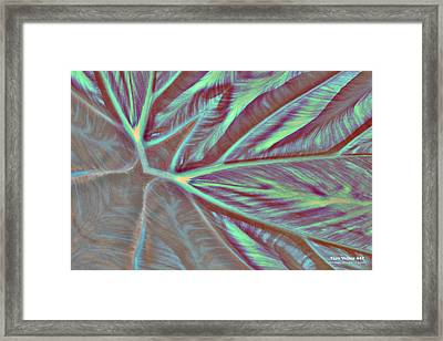 Taro Valley 447 Framed Print
