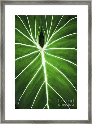 Taro Veins Framed Print by Brandon Tabiolo - Printscapes