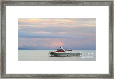 Framed Print featuring the photograph Tasha's Choice by Stephen Mitchell