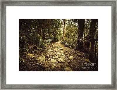 Tasmanian Forest Path Framed Print by Jorgo Photography - Wall Art Gallery