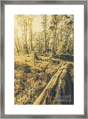 Tasmanian Forest Sunrise Framed Print