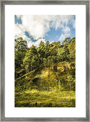 Tasmanian Rain Forest Glade Framed Print by Jorgo Photography - Wall Art Gallery