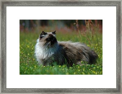 Taste Of Freedom Framed Print by Lori Mellen-Pagliaro
