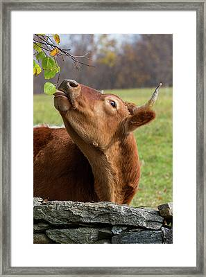 Tasty Framed Print by Bill Wakeley