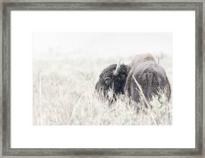 Tatanka Framed Print