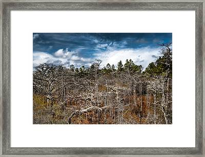 Tate's Hell State Forest Framed Print by Rich Leighton
