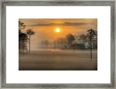 Tate's Hell State Forest Framed Print by JC Findley